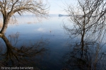 water reflections on Bolsena lake in winter of trees branches like mirror