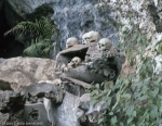 animist cemetery in tana toraja indonesia entrance with skulls